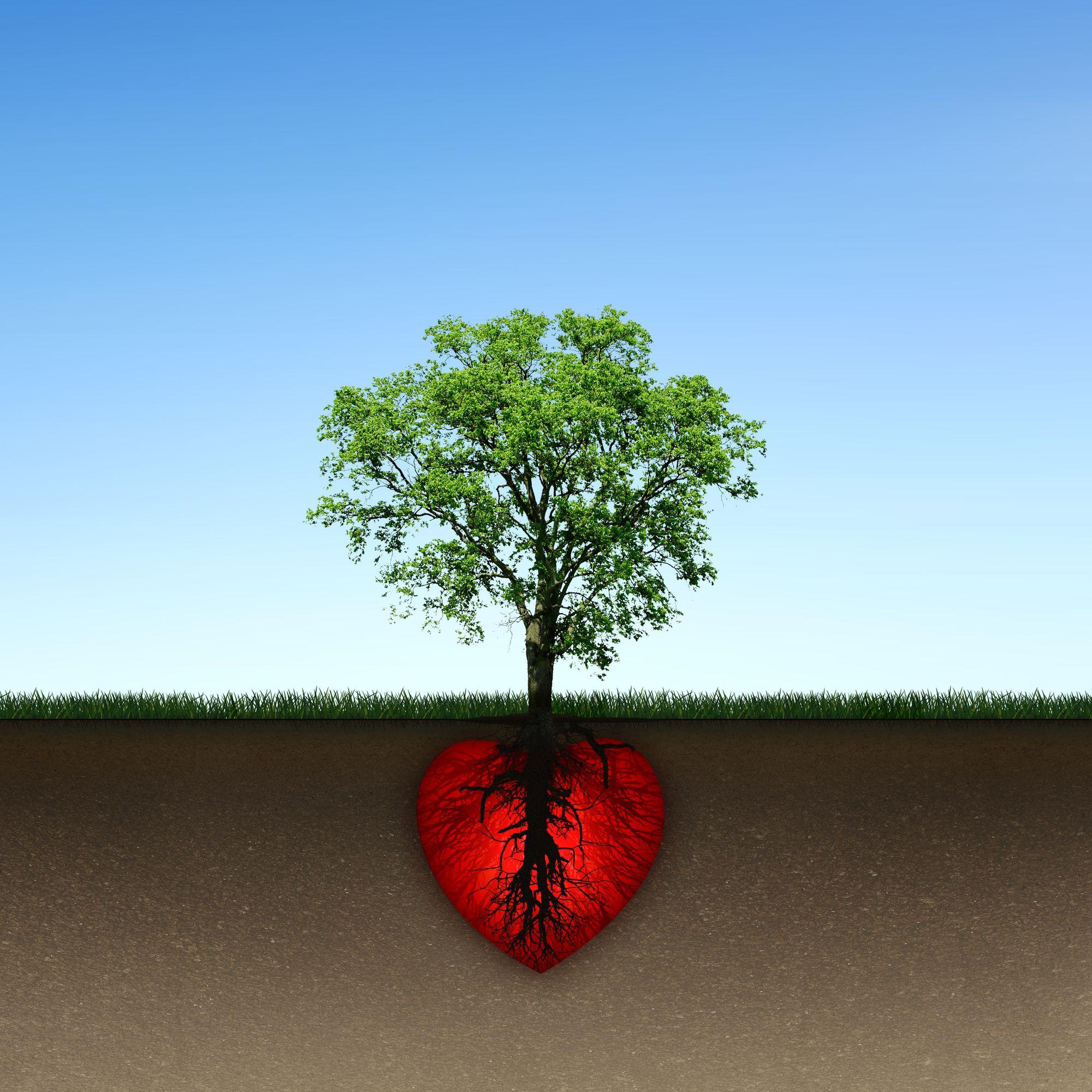 O sont nos racines add saint nazaire - Arbre sans racine envahissante ...